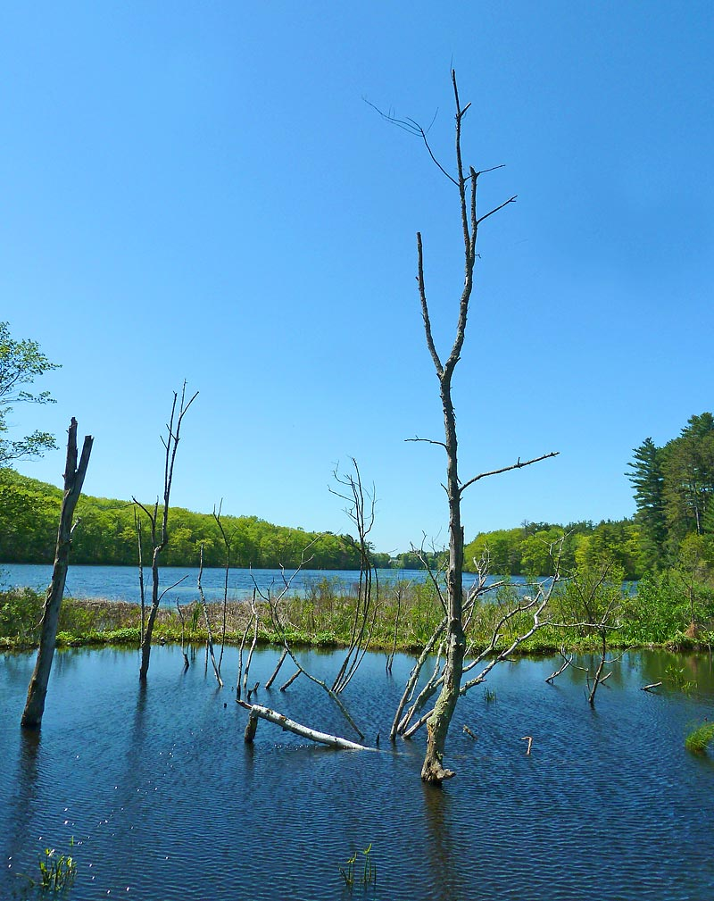Beaver dam touches earth, water and sky